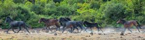 cropped-cavallini_della_giara_branco1.png
