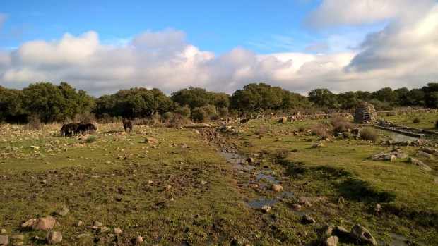 Cavallini della Giara, Mitza Salamessi
